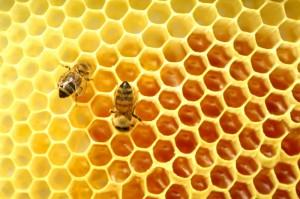 cire-abeille-fabrication